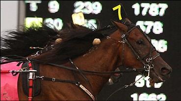 CALIPARI THE HORSE