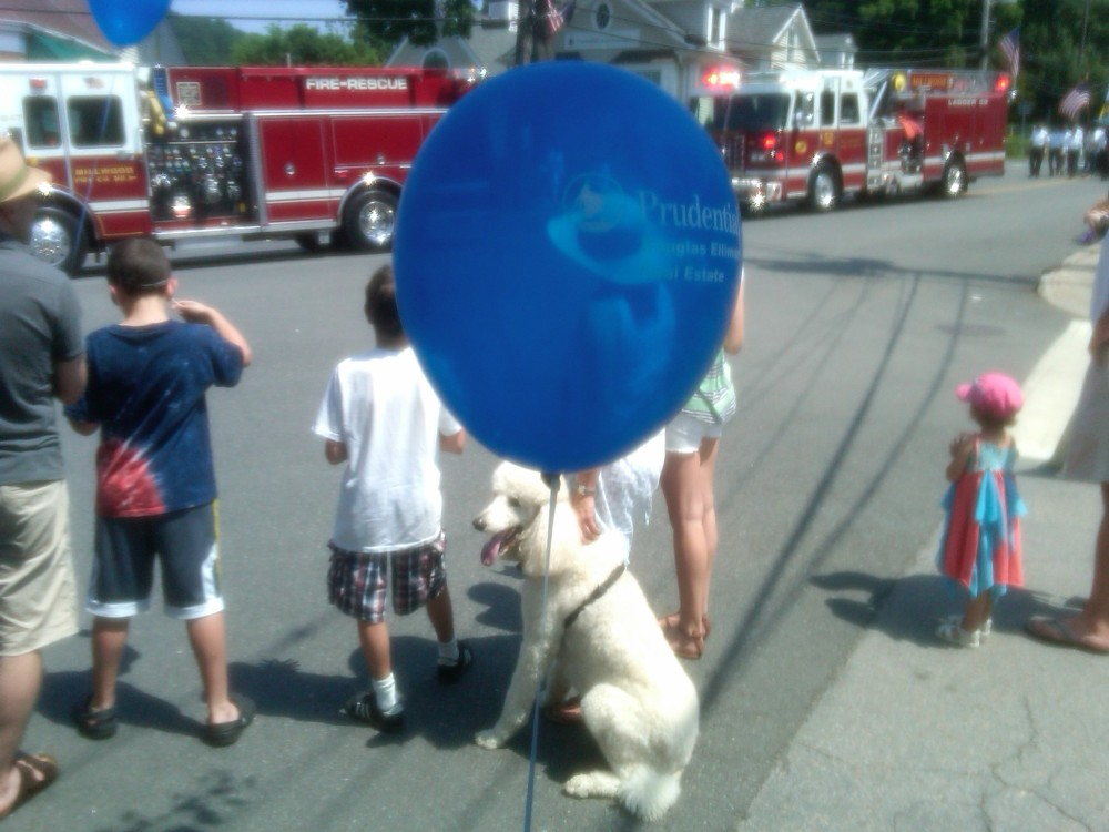 FLEET WEEK DOG BALOON.jpg